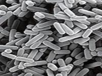 Jótékony baktériumokkal az ekcéma ellen