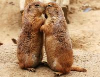Természetes dolog-e a nyelves csók?